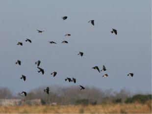 Низко ласточки летают, о дожде предупреждают А летают высоко – значит дождик