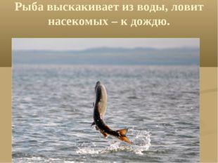 Рыба выскакивает из воды, ловит насекомых – к дождю.