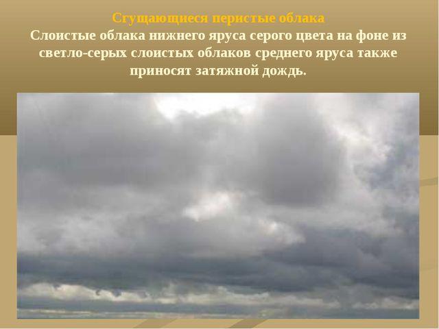 Сгущающиеся перистые облака Слоистые облака нижнего яруса серого цвета на фон...