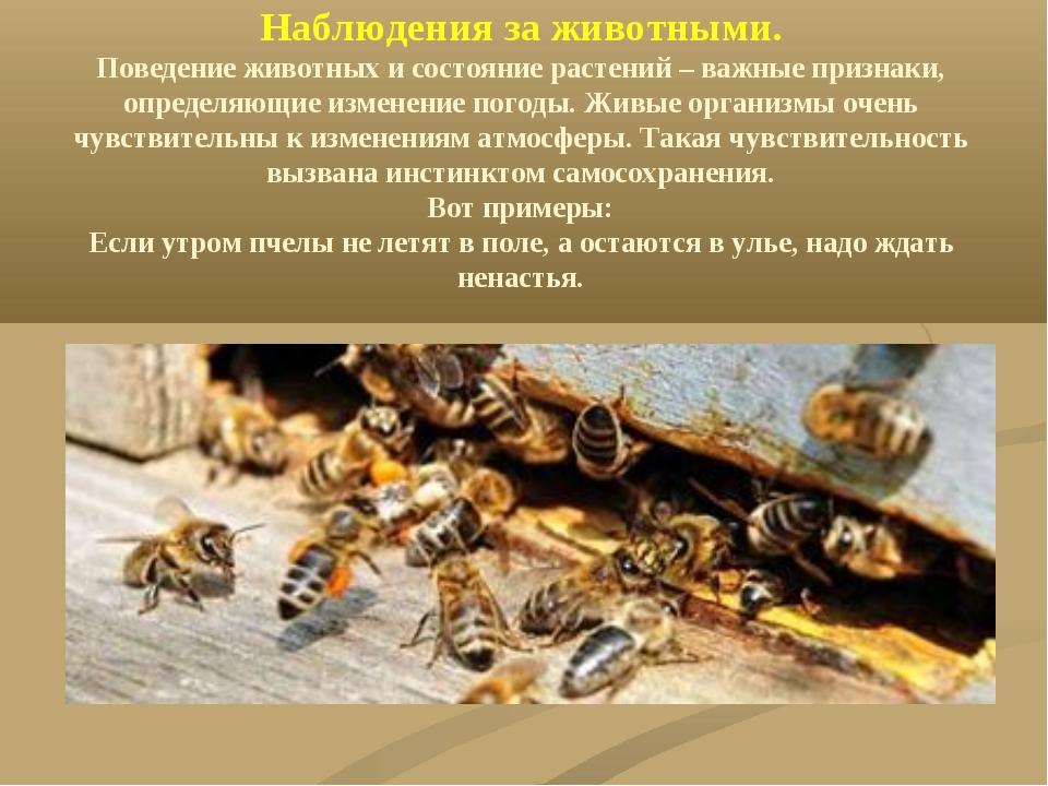 Наблюдения за животными. Поведение животных и состояние растений – важные при...