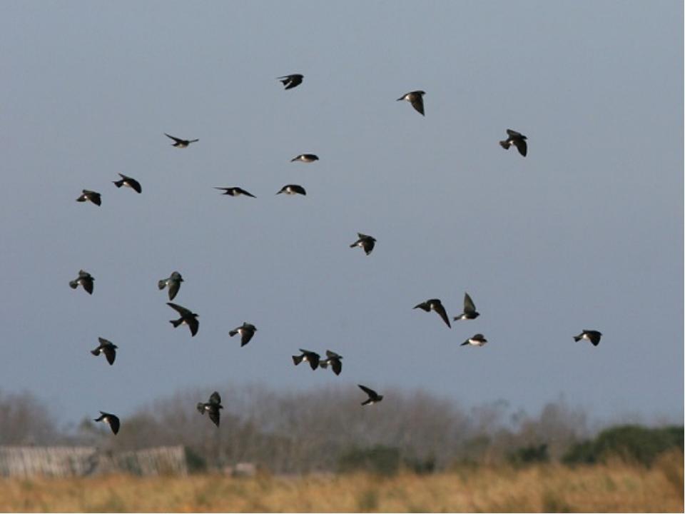 Низко ласточки летают, о дожде предупреждают А летают высоко – значит дождик...