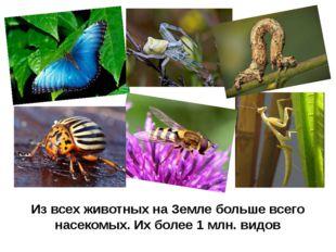 Из всех животных на Земле больше всего насекомых. Их более 1 млн. видов