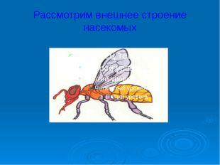 Рассмотрим внешнее строение насекомых