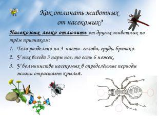 Как отличать животных от насекомых? Насекомых легко отличить от других животн