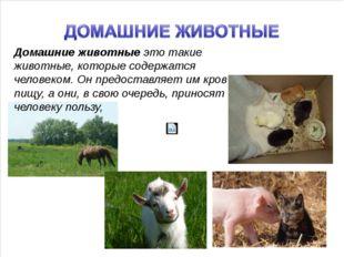 Домашние животные это такие животные, которые содержатся человеком. Он предо