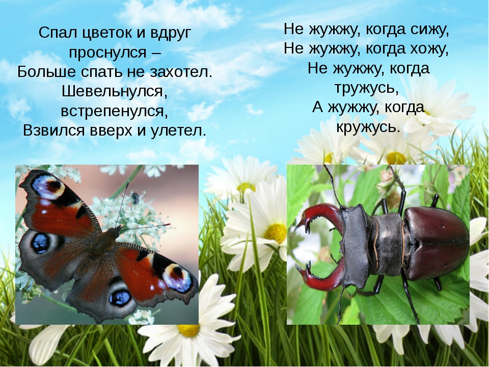 Д/и «Спрячь насекомое»
