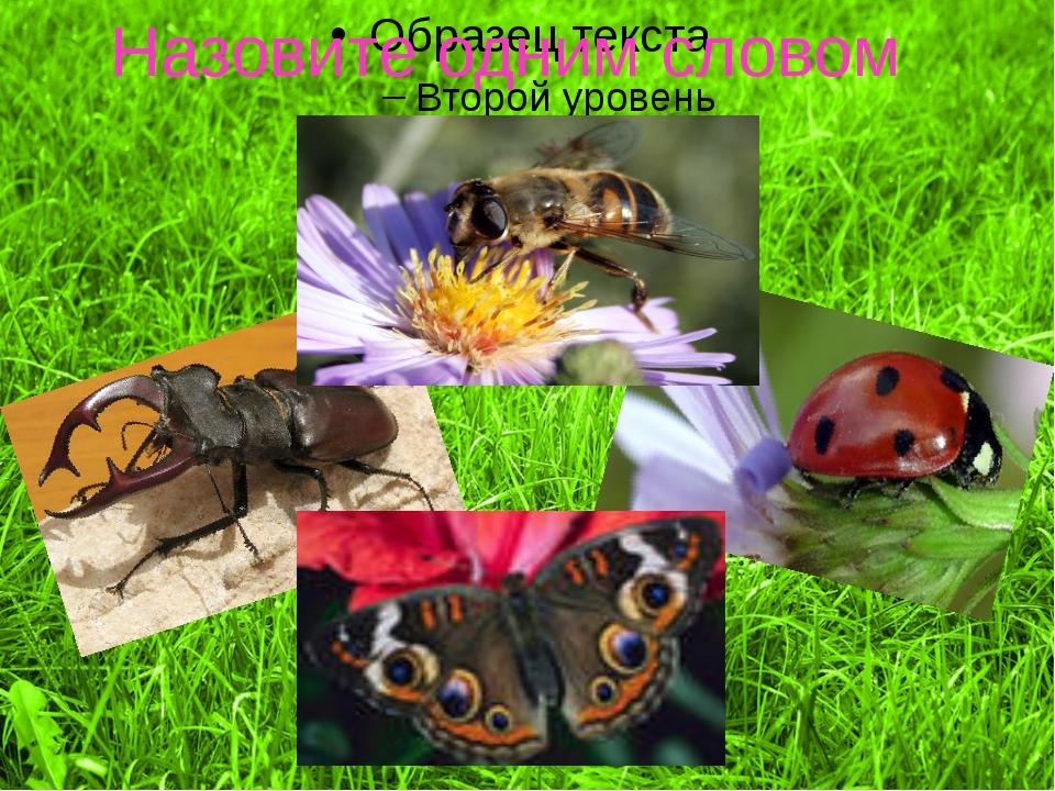 Велико ли их значение? После наблюдений нашей семьи за насекомыми ,мы узнали...