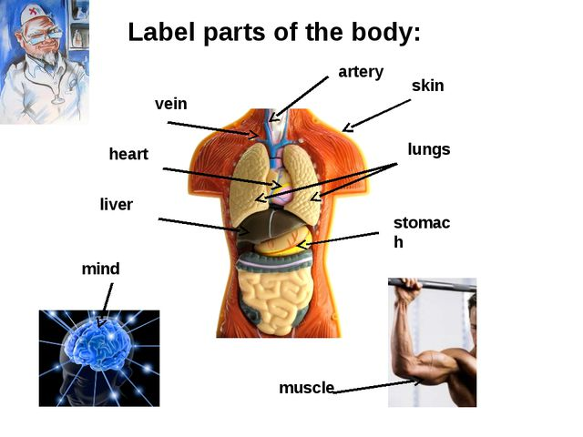 vein artery heart lungs liver stomach muscle skin mind Label parts of the body: