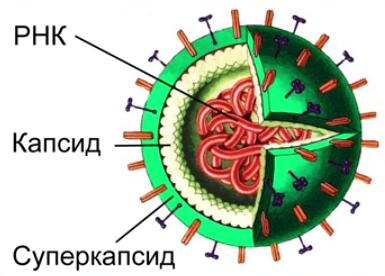 http://static.interneturok.cdnvideo.ru/content/konspekt_image/272102/5631f4a0_647e_0133_f7a4_12313c0dade2.png