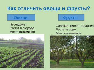 Как отличить овощи и фрукты? Овощи Фрукты Несладкие Растут в огороде Много ви