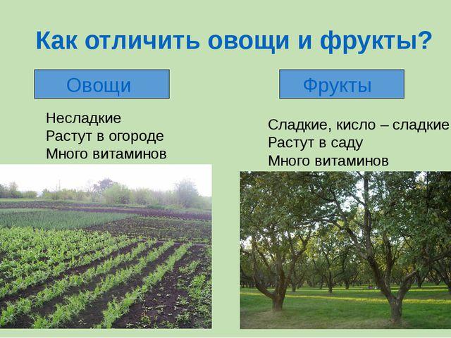 Как отличить овощи и фрукты? Овощи Фрукты Несладкие Растут в огороде Много ви...