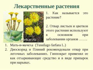 Лекарственные растения 1. Как называется это растение? 2. Отвар листьев и цве