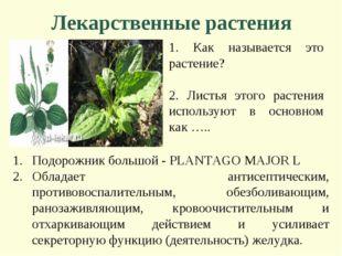Лекарственные растения 1. Как называется это растение? 2. Листья этого растен