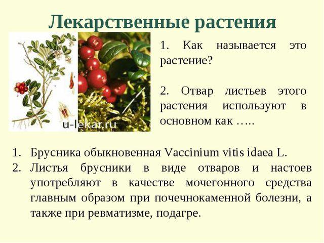 Лекарственные растения 1. Как называется это растение? 2. Отвар листьев этого...