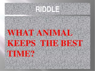 RIDDLE WHAT ANIMAL KEEPS THE BEST TIME?