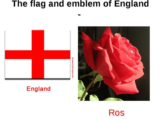 The flag and emblem of England - Rose