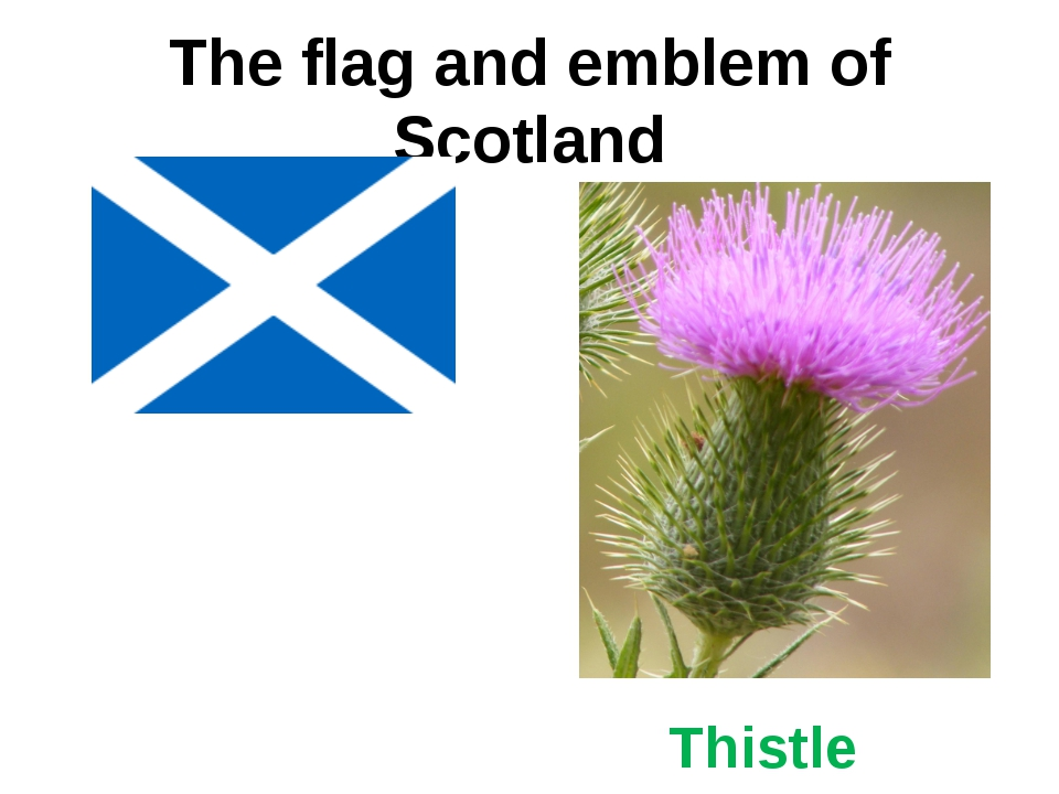The flag and emblem of Scotland Thistle