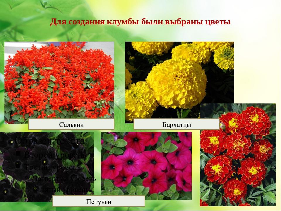Для создания клумбы были выбраны цветы Петуньи Бархатцы Сальвия