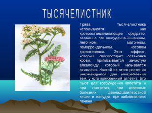 Трава тысячелистника используются как кровоостанавливающее средство, особенно