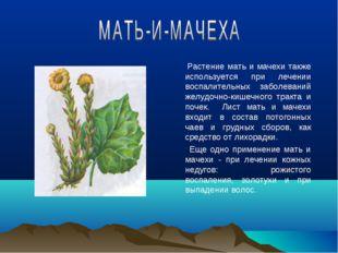 Растение мать и мачехи также используется при лечении воспалительных заболев