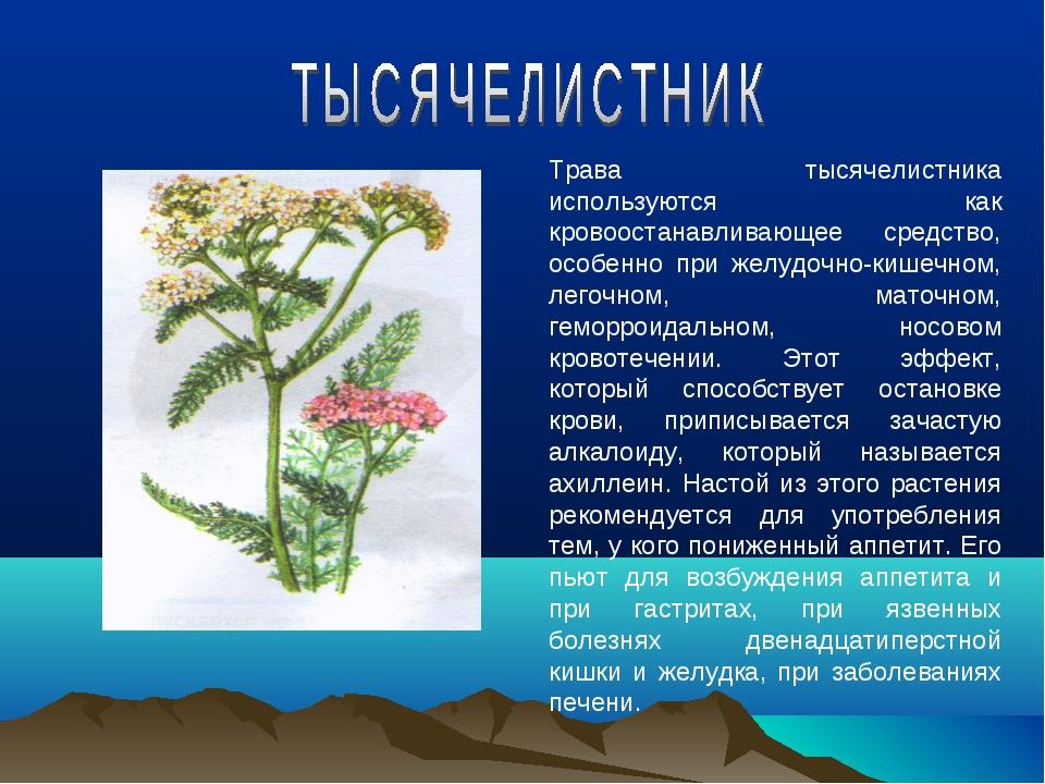 Трава тысячелистника используются как кровоостанавливающее средство, особенно...