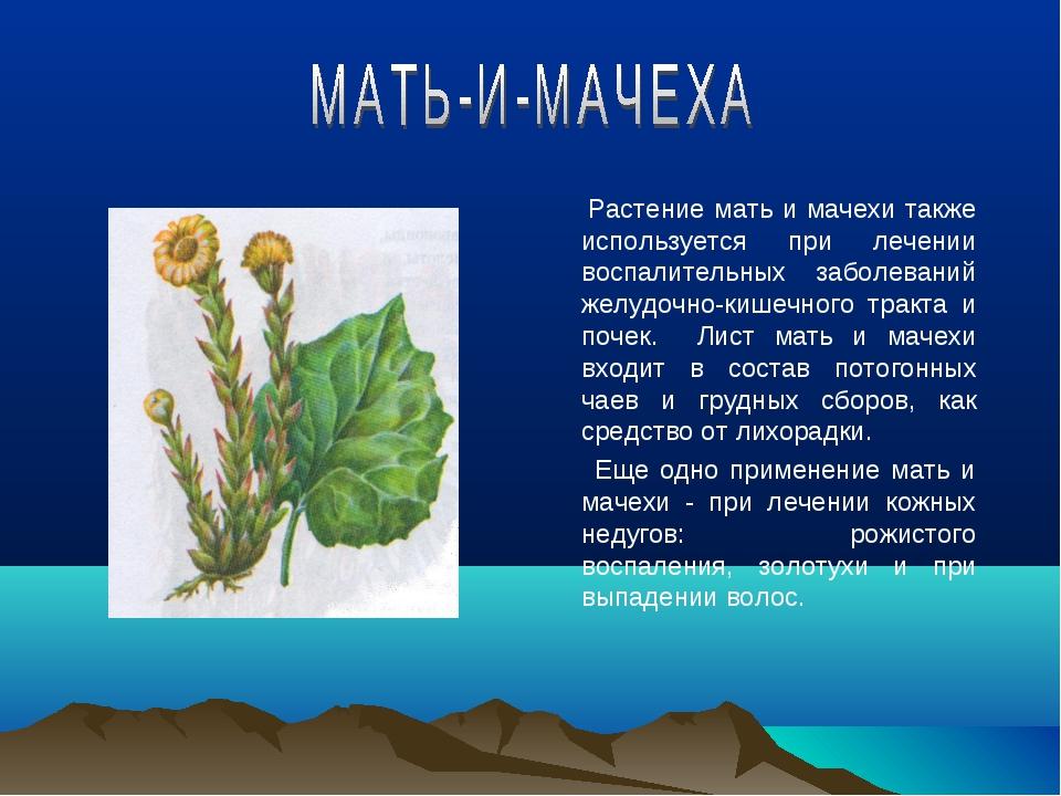 Растение мать и мачехи также используется при лечении воспалительных заболев...