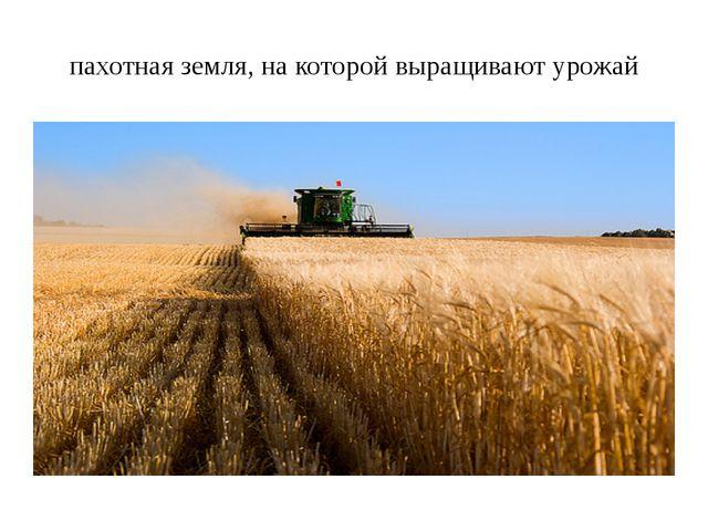 пахотная земля, на которой выращивают урожай
