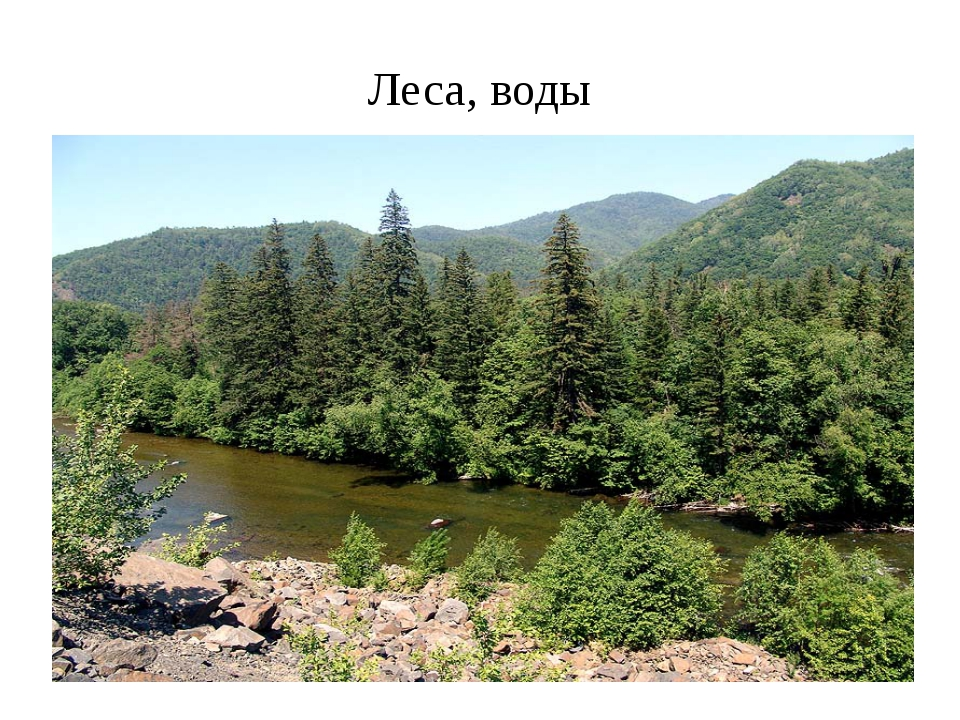 Леса, воды