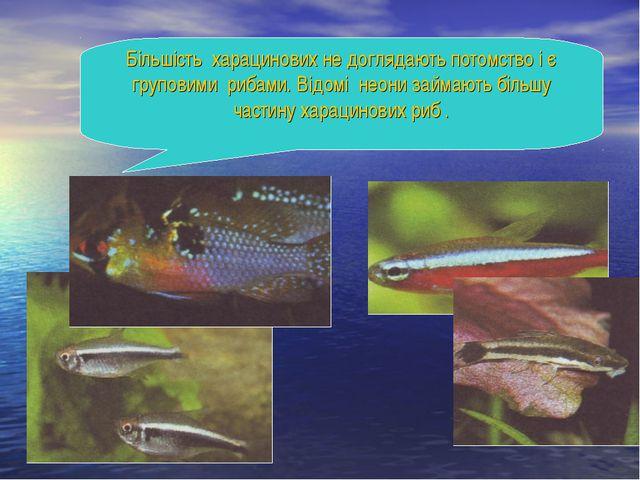 Більшість харацинових не доглядають потомство і є груповими рибами. Відомі н...