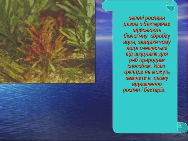 зелені рослини разом з бактеріями здійснюють біологічну обробку води, завдяки...