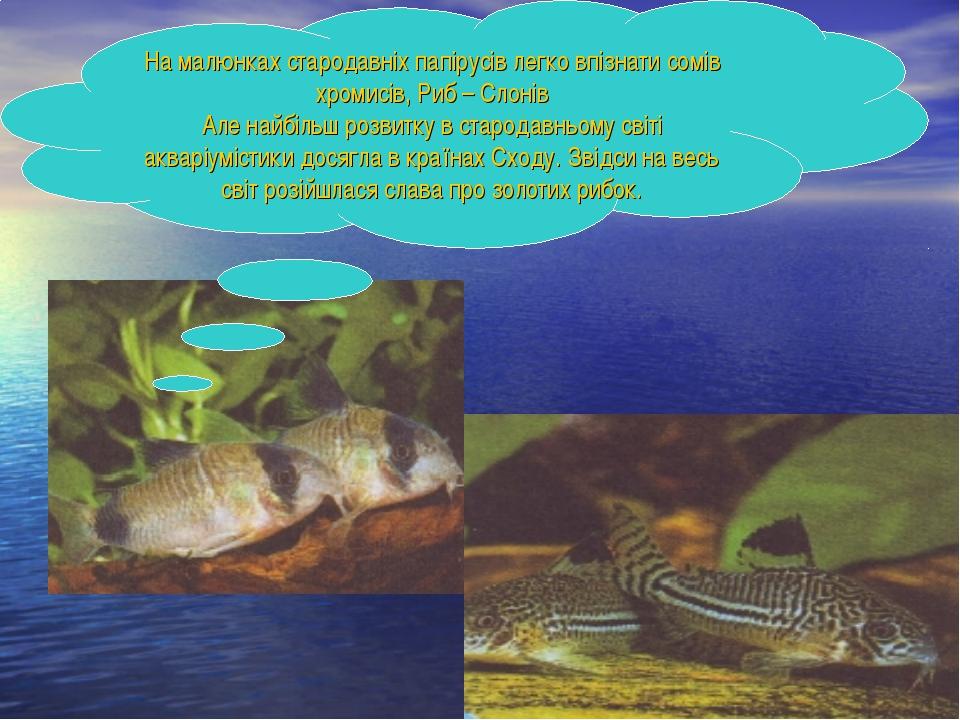 На малюнках стародавніх папірусів легко впізнати сомів хромисів, Риб – Слонів...