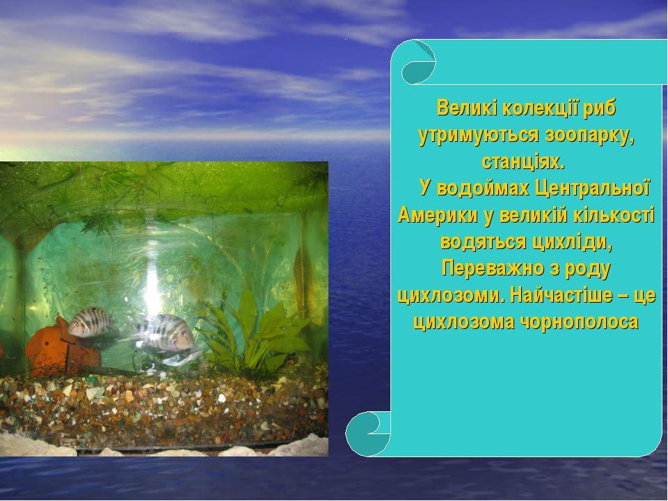 Великі колекції риб утримуються зоопарку, станціях. У водоймах Центральної Ам...