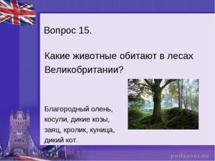 Вопрос 15. Какие животные обитают в лесах Великобритании? Благородный олень,