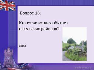 Вопрос 16. Кто из животных обитает в сельских районах? Лиса