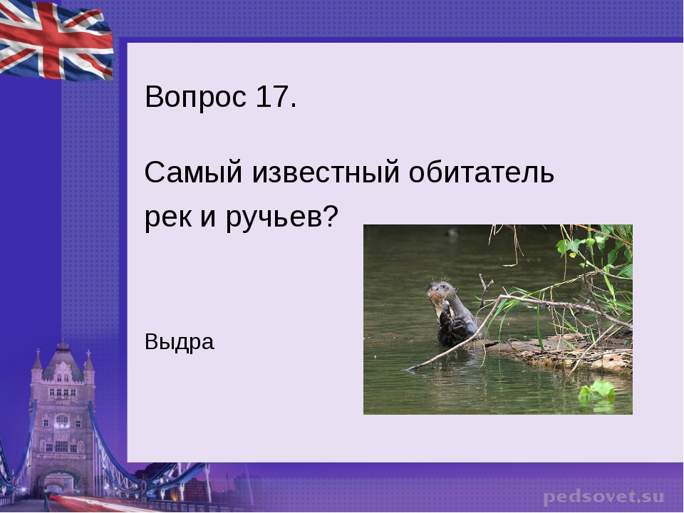 Вопрос 17. Самый известный обитатель рек и ручьев? Выдра