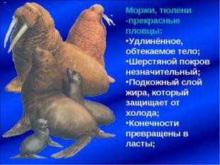 Моржи, тюлени -прекрасные пловцы: Удлинённое, обтекаемое тело; Шерстяной покр