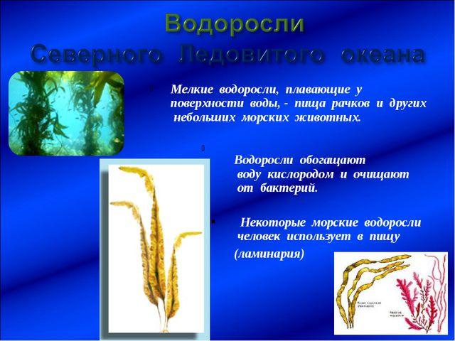 Мелкие водоросли, плавающие у поверхности воды, - пища рачков и других неболь...