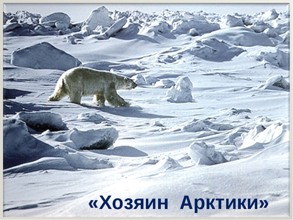 «Хозяин Арктики»