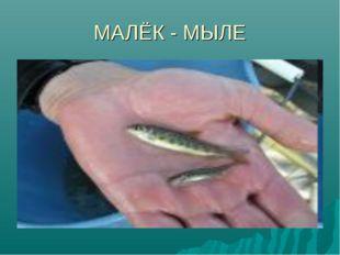 МАЛЁК - МЫЛЕ