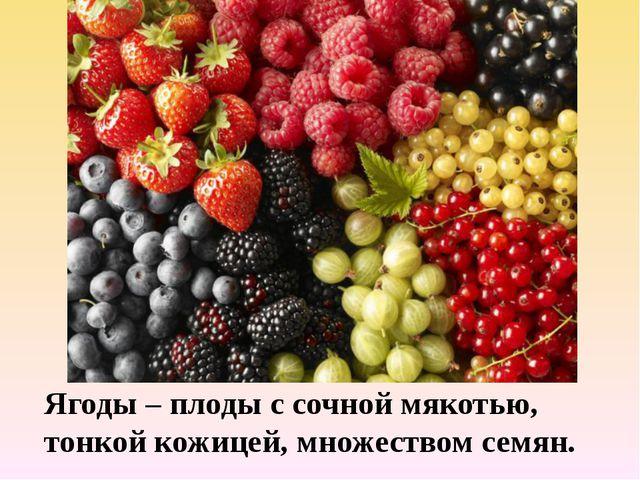 Ягоды – плоды с сочной мякотью, тонкой кожицей, множеством семян.