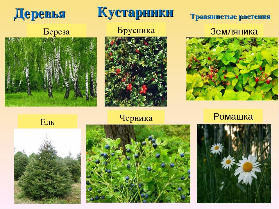Картинки групп растений деревья кустарники и травы часто