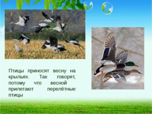 Птицы приносят весну на крыльях. Так говорят, потому что весной прилетают пер