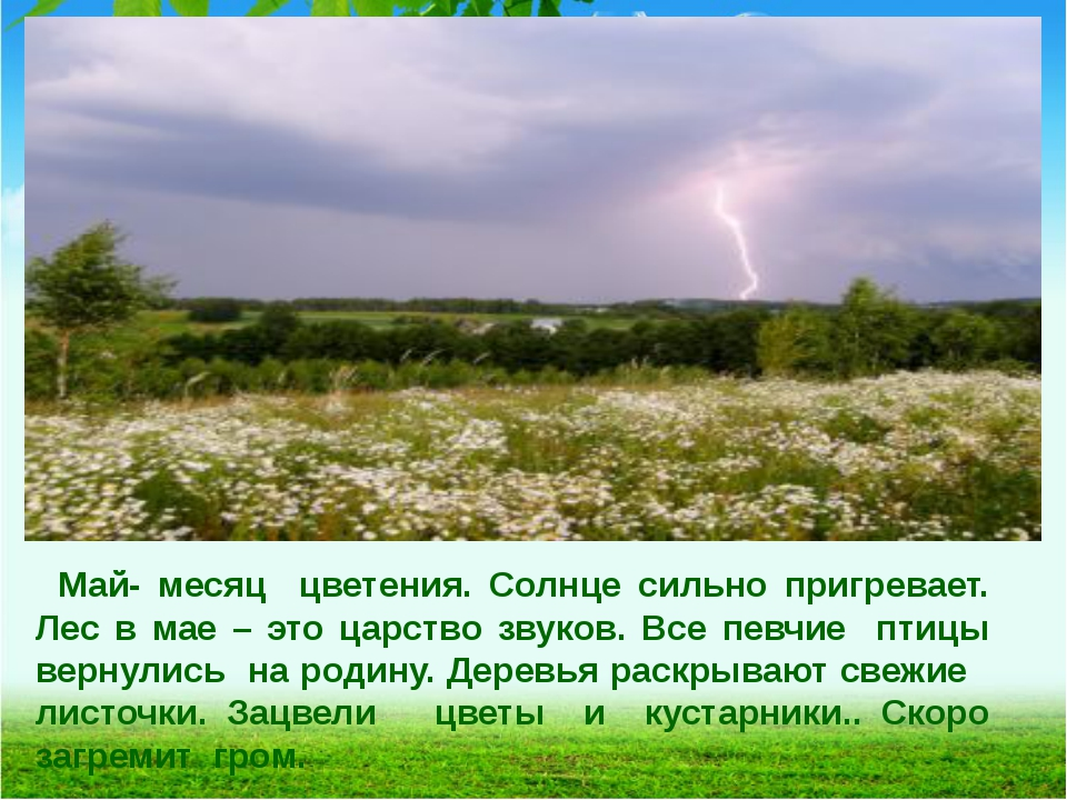 Май- месяц цветения. Солнце сильно пригревает. Лес в мае – это царство звуков...