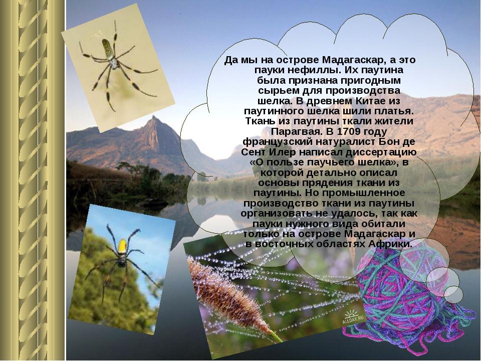 Да мы на острове Мадагаскар, а это пауки нефиллы. Их паутина была признана пр...