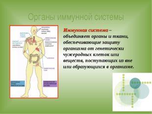 Органы иммунной системы Иммунная система – объединяет органы и ткани, обеспеч