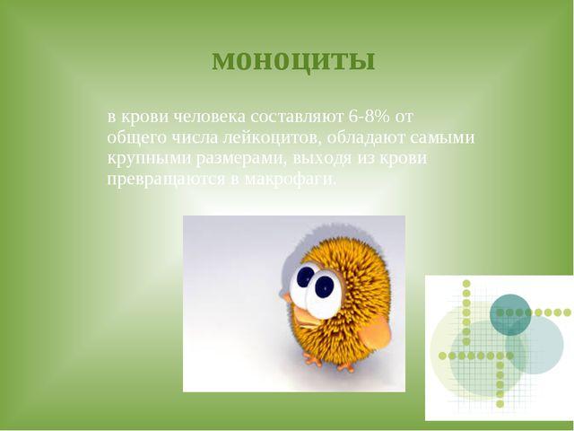 моноциты в крови человека составляют 6-8% от общего числа лейкоцитов, облада...