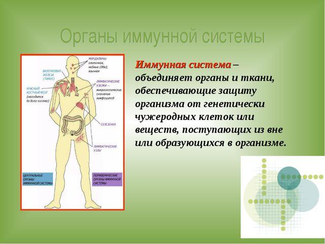 Органы иммунной системы Иммунная система – объединяет органы и ткани, обеспеч...