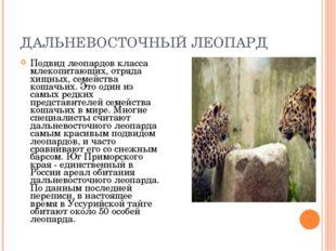 ДАЛЬНЕВОСТОЧНЫЙ ЛЕОПАРД Подвид леопардов класса млекопитающих, отряда хищных,