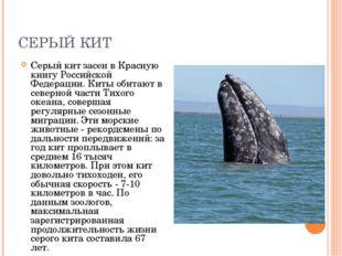 СЕРЫЙ КИТ Серый кит засен в Красную книгу Российской Федерации. Киты обитают
