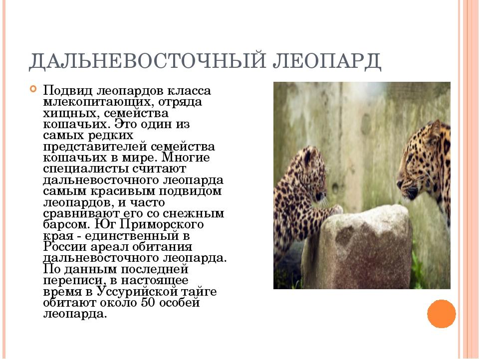 ДАЛЬНЕВОСТОЧНЫЙ ЛЕОПАРД Подвид леопардов класса млекопитающих, отряда хищных,...